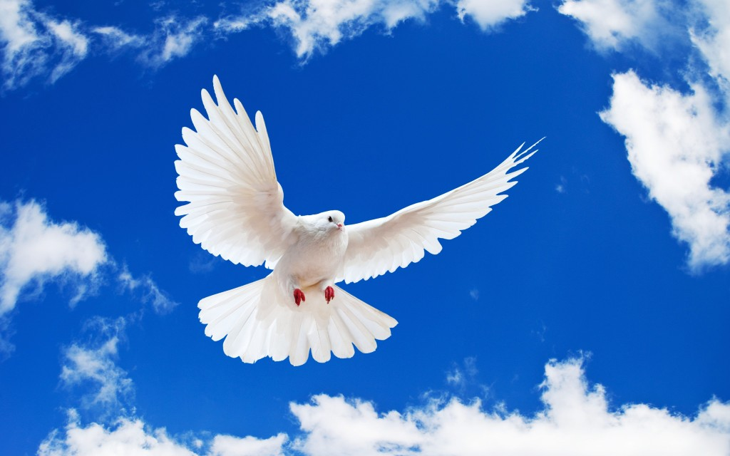 dove-35349-36157-hd-wallpapers