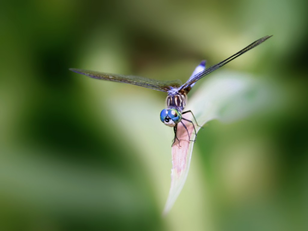 dragonfly-39227-40132-hd-wallpapers