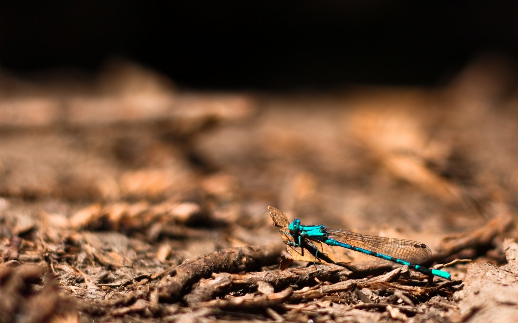 dragonfly-background-39231-40136-hd-wallpapers