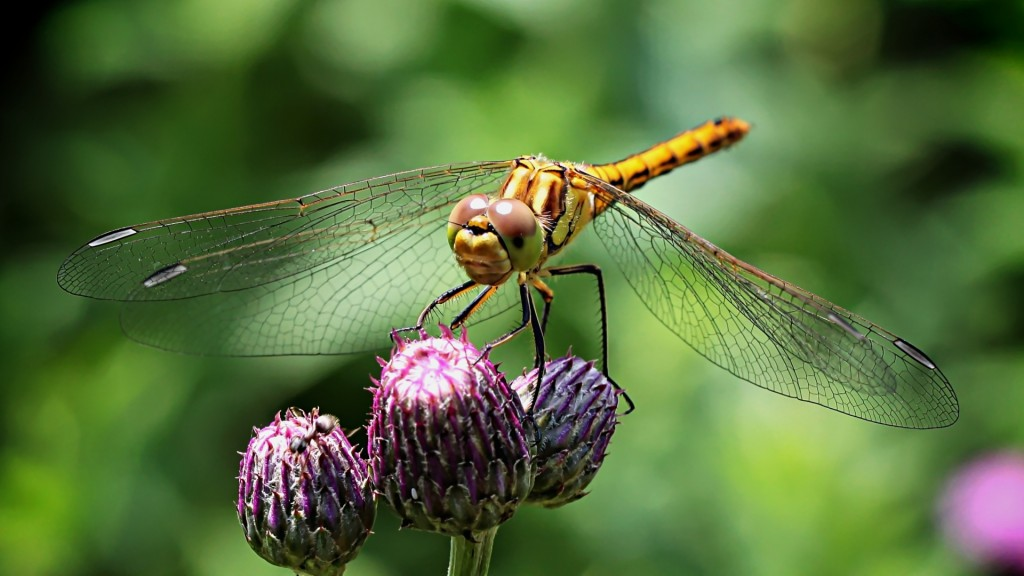 dragonfly-insect-wallpaper-49545-51220-hd-wallpapers