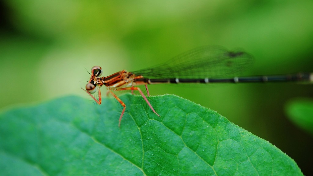 dragonfly-wallpaper-39238-40143-hd-wallpapers