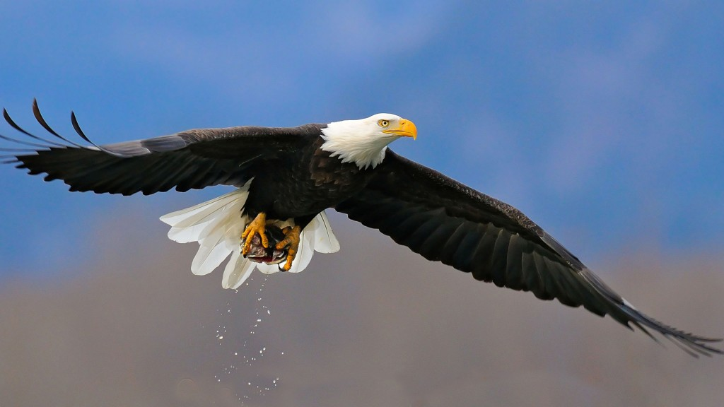 eagle-wallpaper-42006-42996-hd-wallpapers