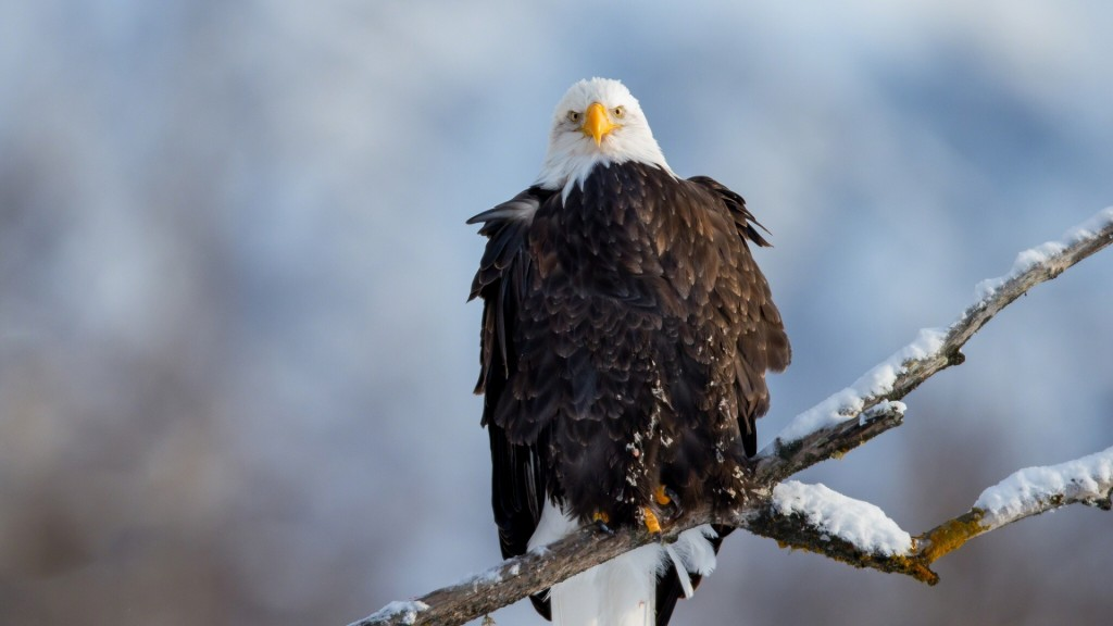 eagle-wallpaper-hd-50055-51742-hd-wallpapers