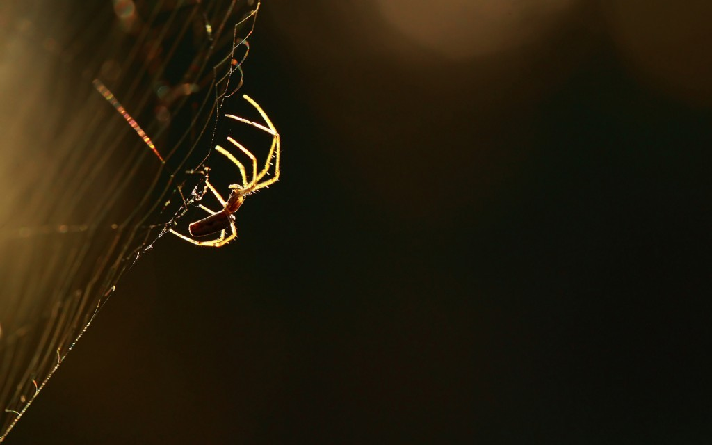 fantastic-spider-web-wallpaper-41568-42544-hd-wallpapers