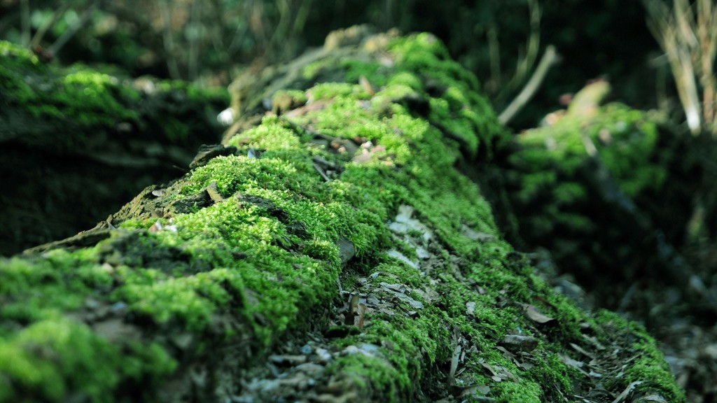 forest-moss-34392-35167-hd-wallpapers