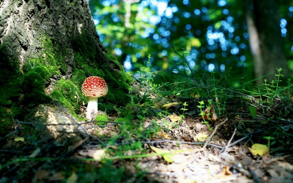 forest-moss-wallpaper-34383-35158-hd-wallpapers