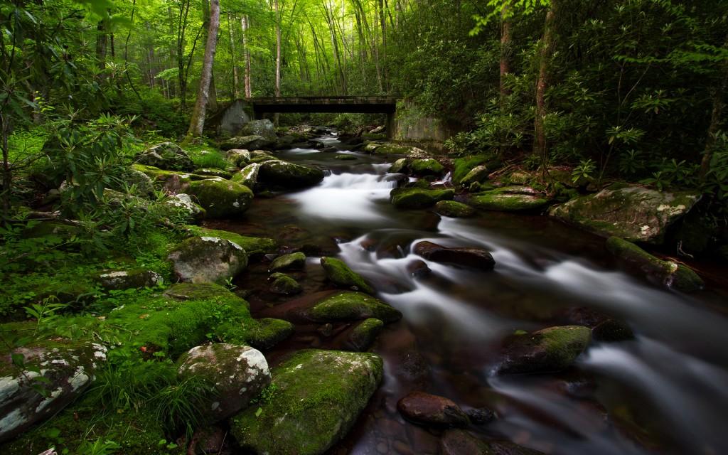 forest-moss-wallpaper-34384-35159-hd-wallpapers