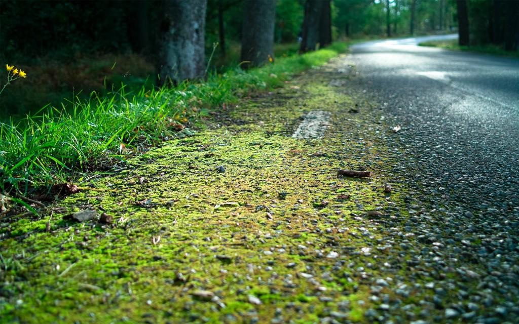 forest-moss-wallpaper-34397-35172-hd-wallpapers