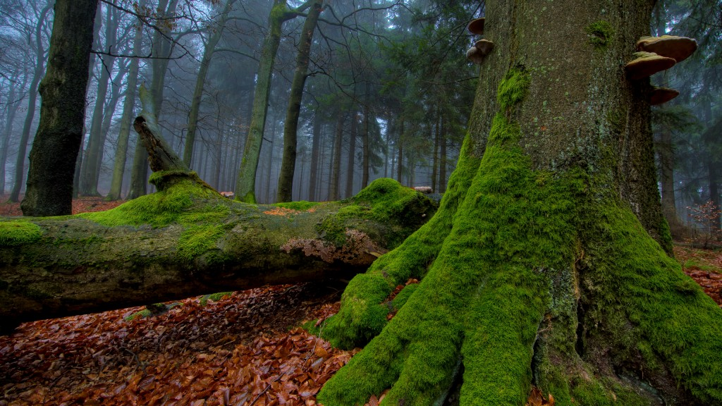 forest-moss-wallpapers-34398-35173-hd-wallpapers