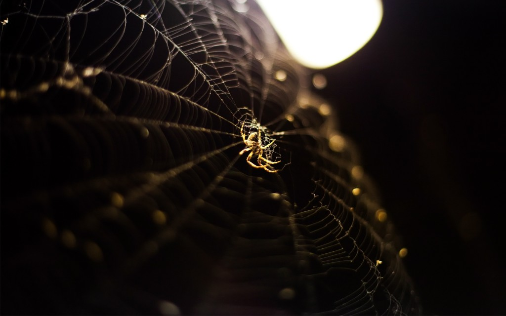 free-spider-wallpaper-23766-24421-hd-wallpapers