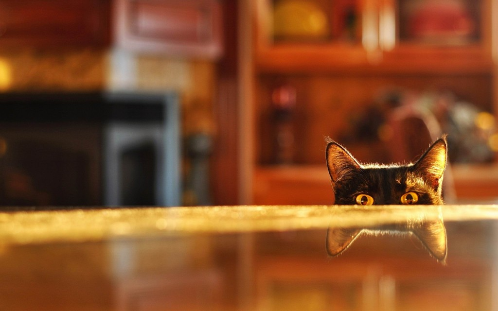 funny-table-wallpaper-43269-44315-hd-wallpapers