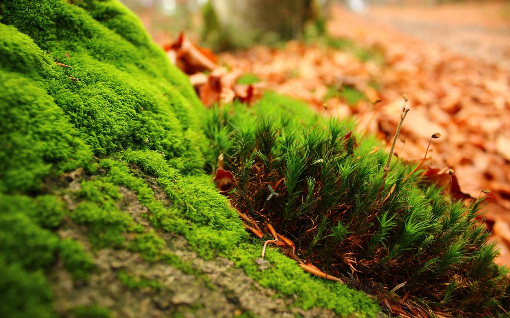 moss-desktop-wallpaper-49471-51146-hd-wallpapers