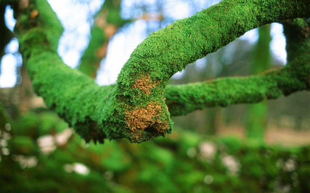 moss-wallpaper-38572-39453-hd-wallpapers