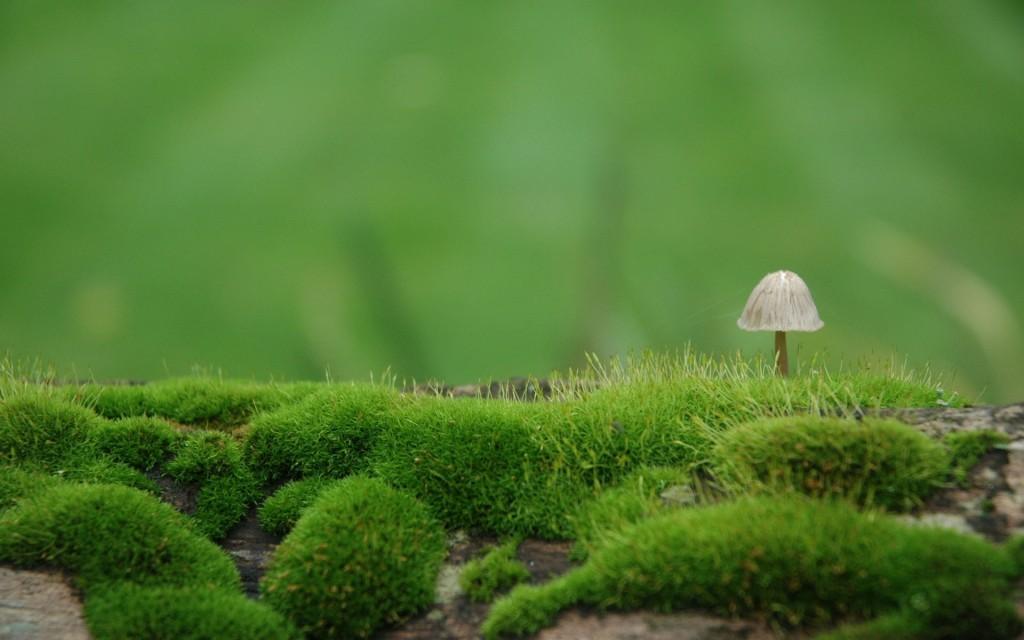 moss-wallpaper-38579-39460-hd-wallpapers