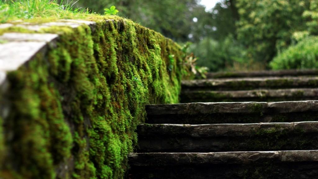 moss-wallpaper-38584-39465-hd-wallpapers