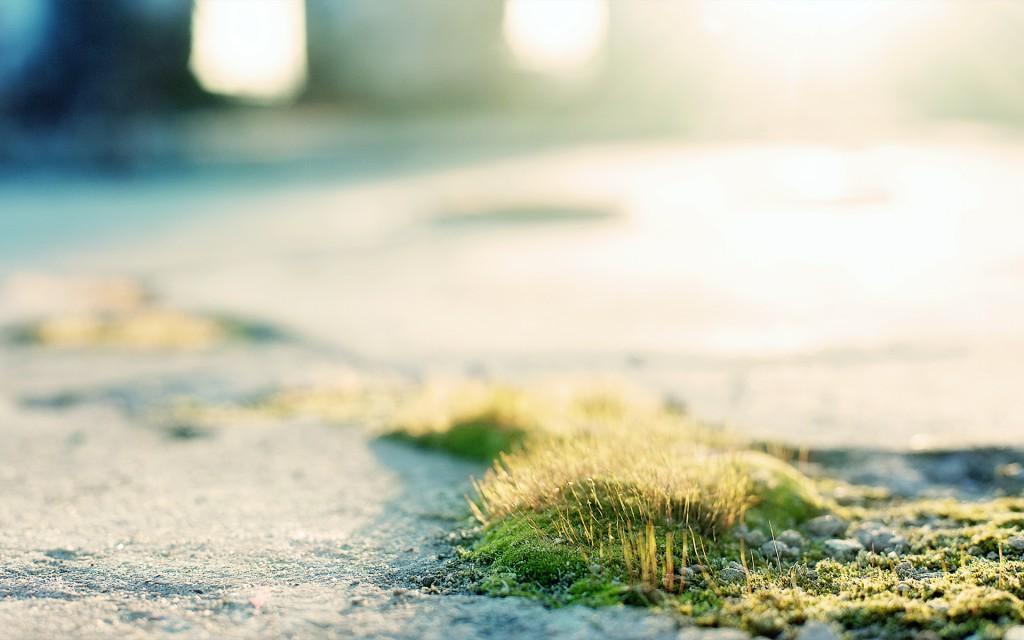 moss-wallpaper-38585-39466-hd-wallpapers