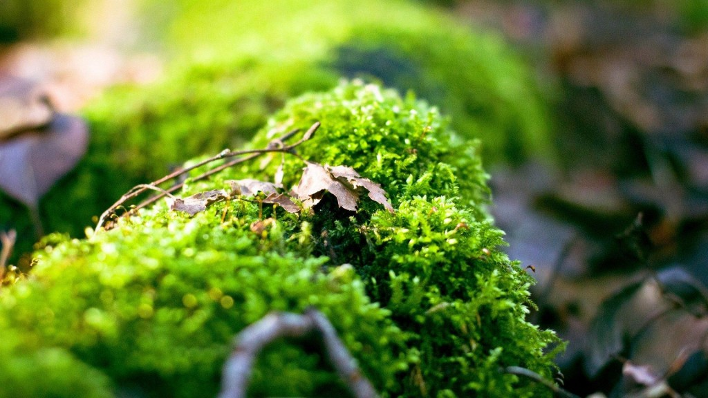 moss-wallpapers-38580-39461-hd-wallpapers