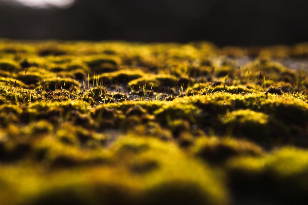 moss-widescreen-wallpaper-49475-51149-hd-wallpapers