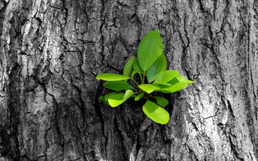 new-growth-on-tree-bark-wallpaper-49761-51440-hd-wallpapers