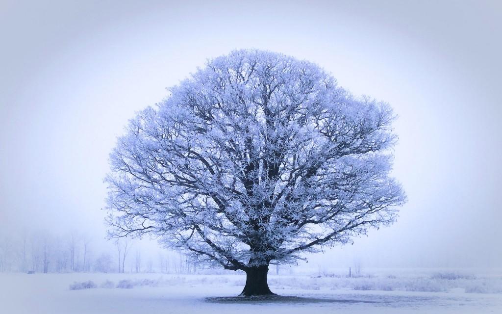 oak-tree-32977-33732-hd-wallpapers