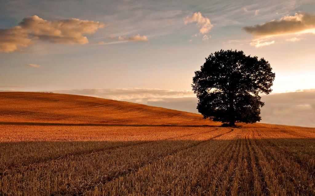 oak-tree-background-32965-33720-hd-wallpapers