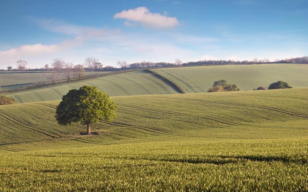 oak-tree-countryside-wallpaper-49755-51434-hd-wallpapers