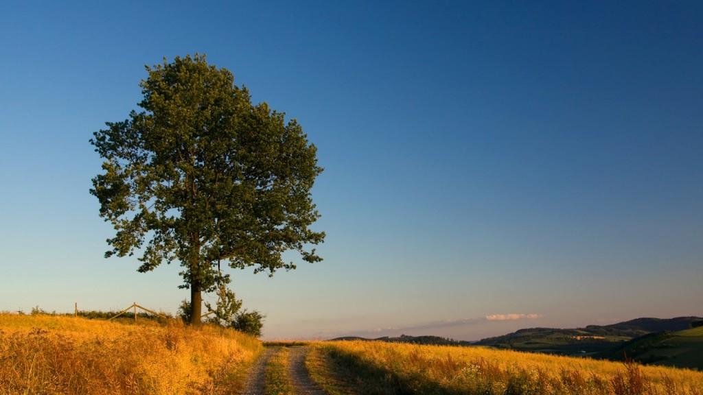 oak-tree-wallpaper-32957-33712-hd-wallpapers