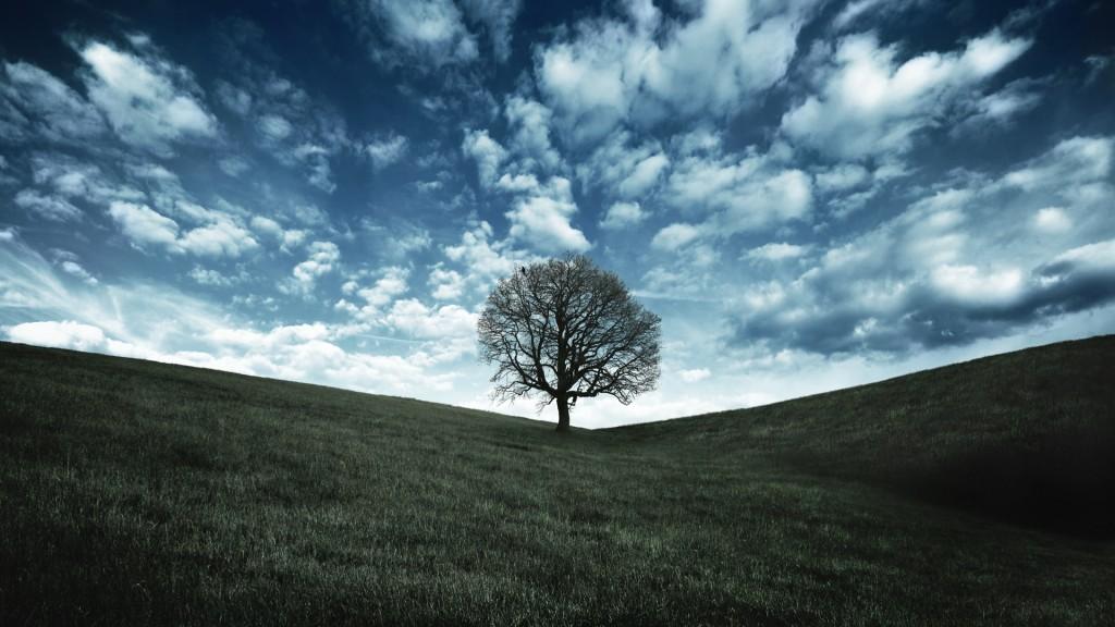 oak-tree-wallpapers-32972-33727-hd-wallpapers