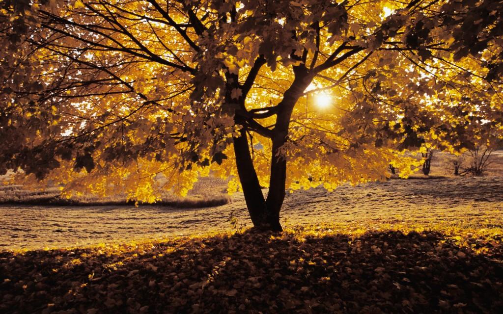 oak-trees-32978-33733-hd-wallpapers