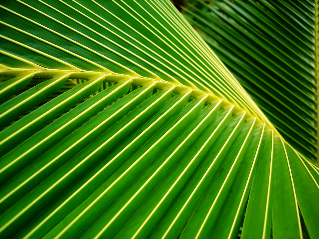 Palm Leaf 27157 27874 Hd Wallpapers