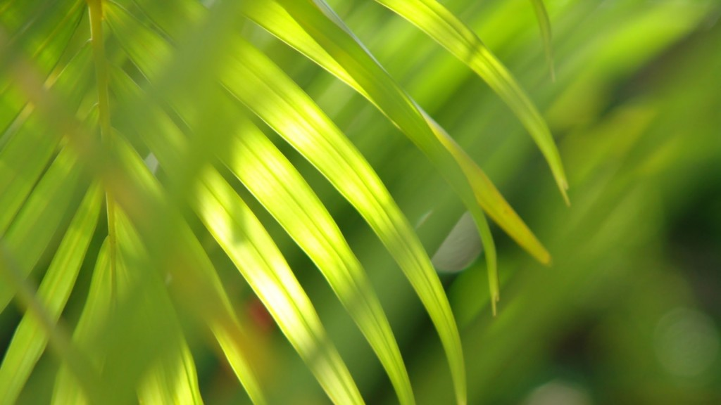 palm-leaf-desktop-wallpaper-49766-51445-hd-wallpapers