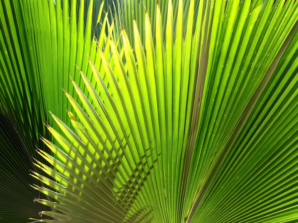 palm-leaf-wallpaper-27156-27873-hd-wallpapers