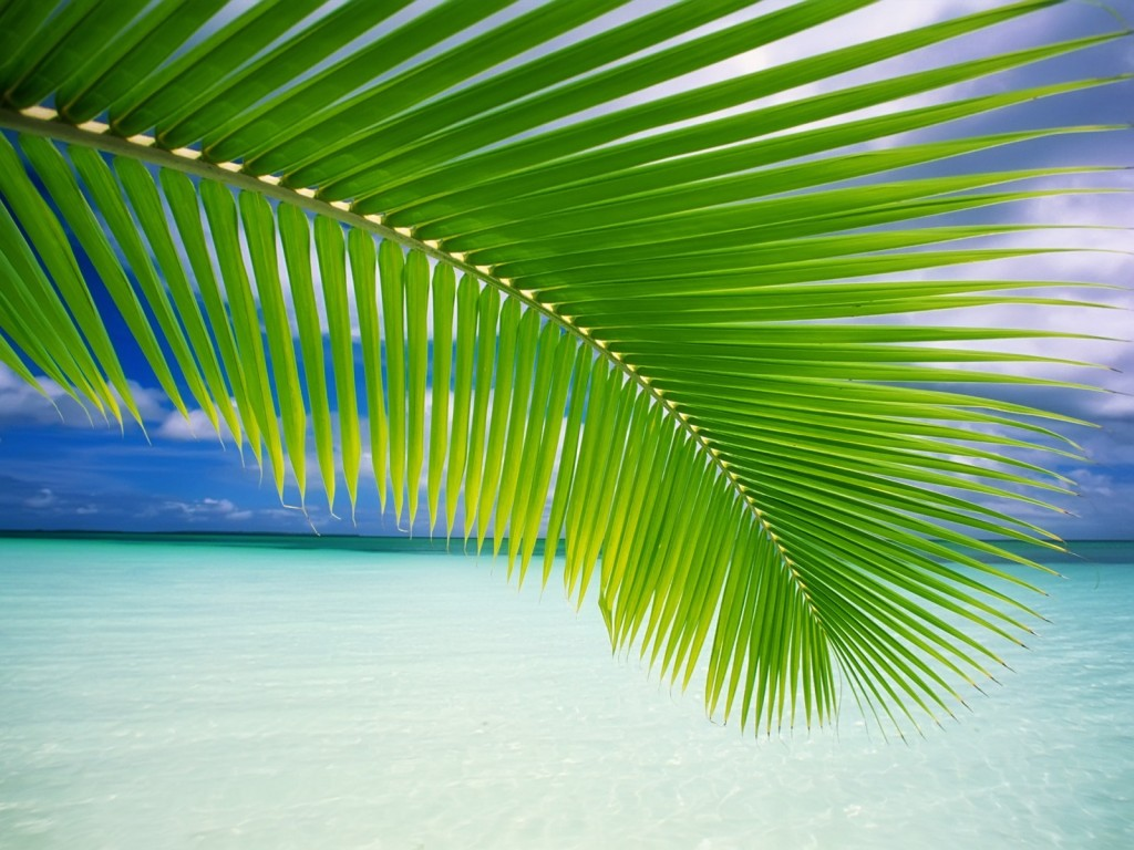 palm-leaf-wallpaper-27159-27876-hd-wallpapers