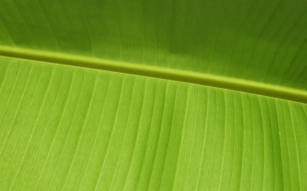 palm-leaf-wallpaper-27164-27881-hd-wallpapers