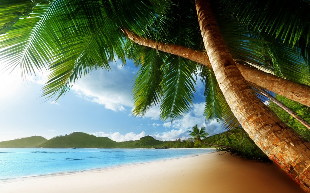 palm-tree-background-22011-22567-hd-wallpapers