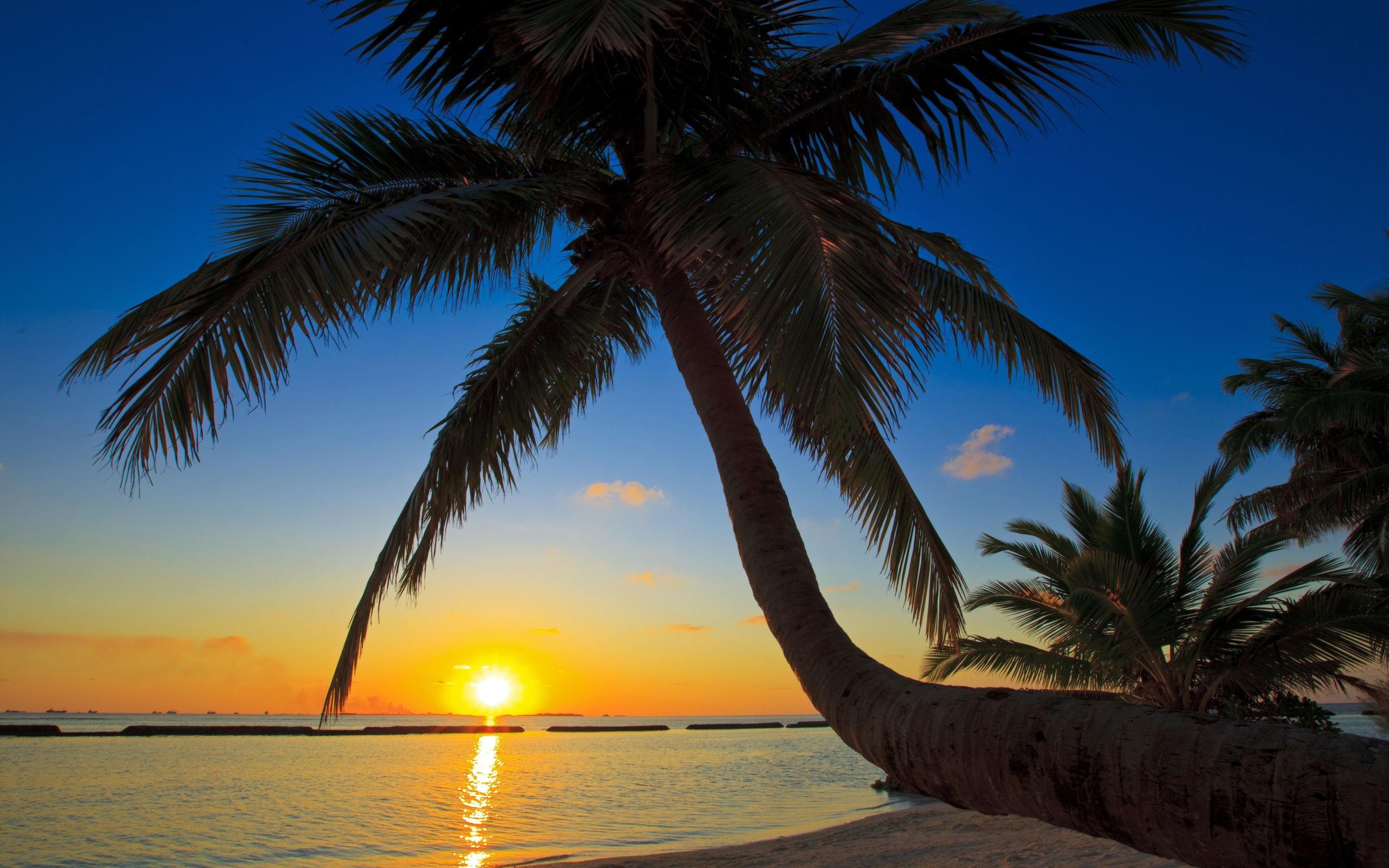 15 Wonderful HD Palm Tree Wallpapers - HDWallSource.com