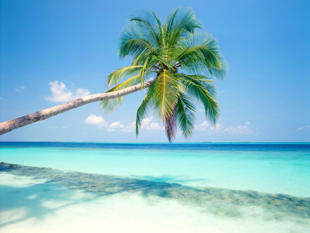 palm-tree-wallpaper-22006-22562-hd-wallpapers