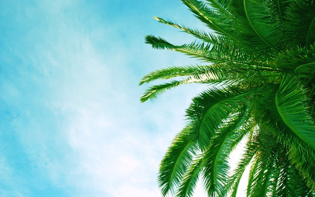 palm-tree-wallpaper-45857-47130-hd-wallpapers