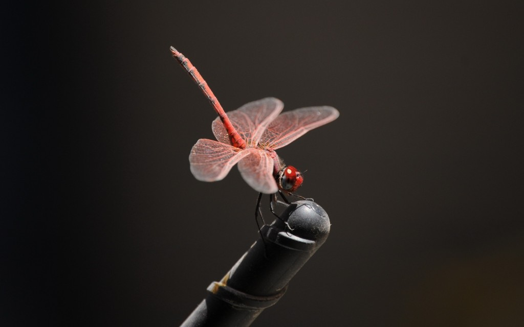 pink-dragonfly-wallpaper-46793-48248-hd-wallpapers