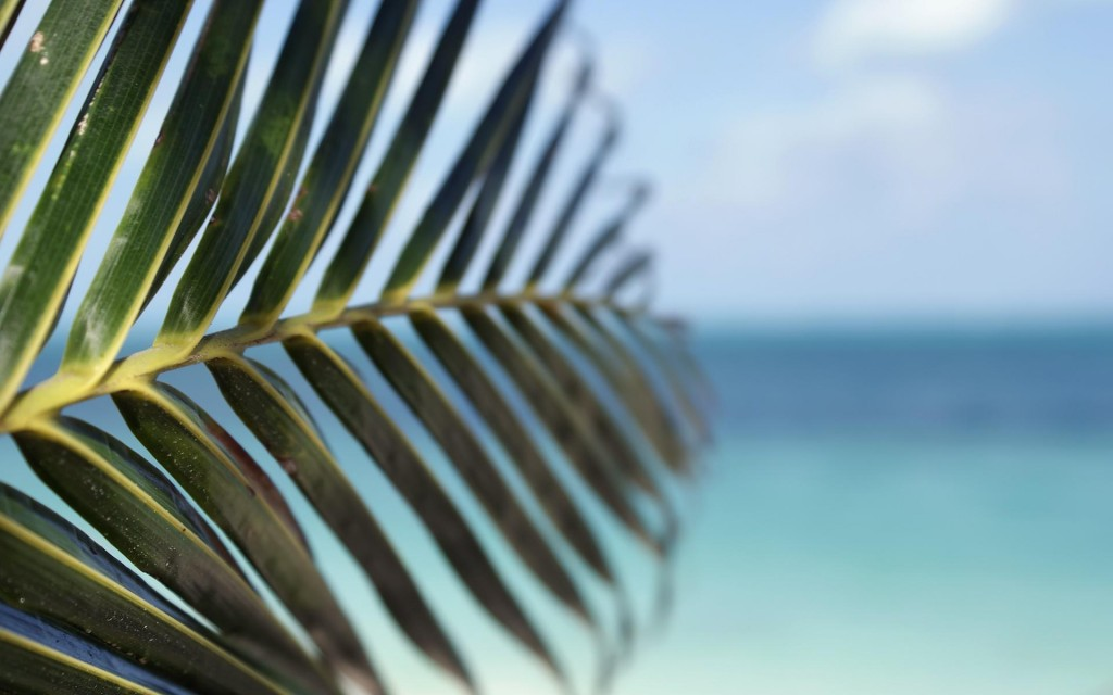 pretty-palm-leaf-wallpaper-46267-47607-hd-wallpapers