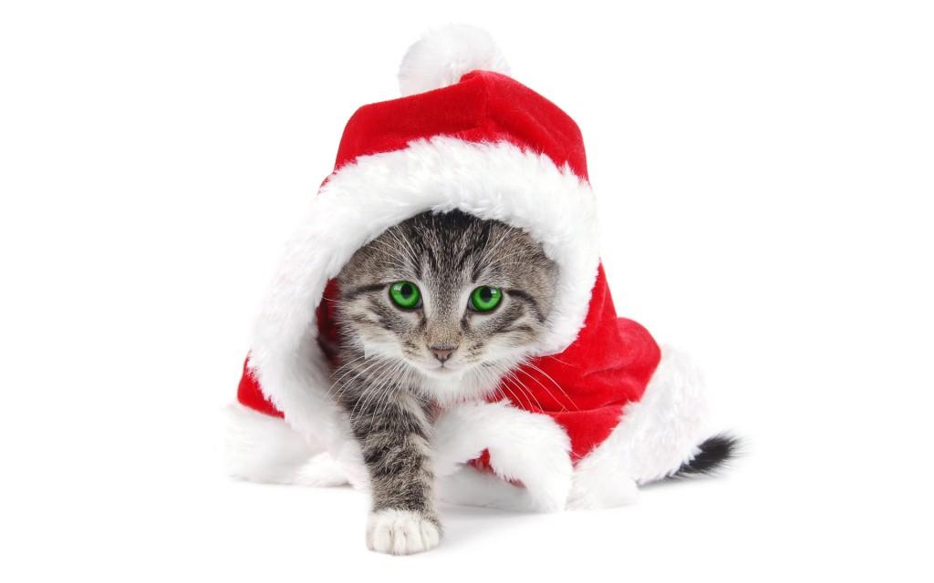 santa-hat-cat-wallpaper-49844-51525-hd-wallpapers