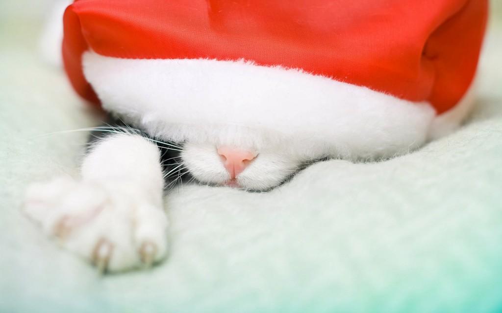 santa-hat-cat-widescreen-wallpaper-49845-51526-hd-wallpapers