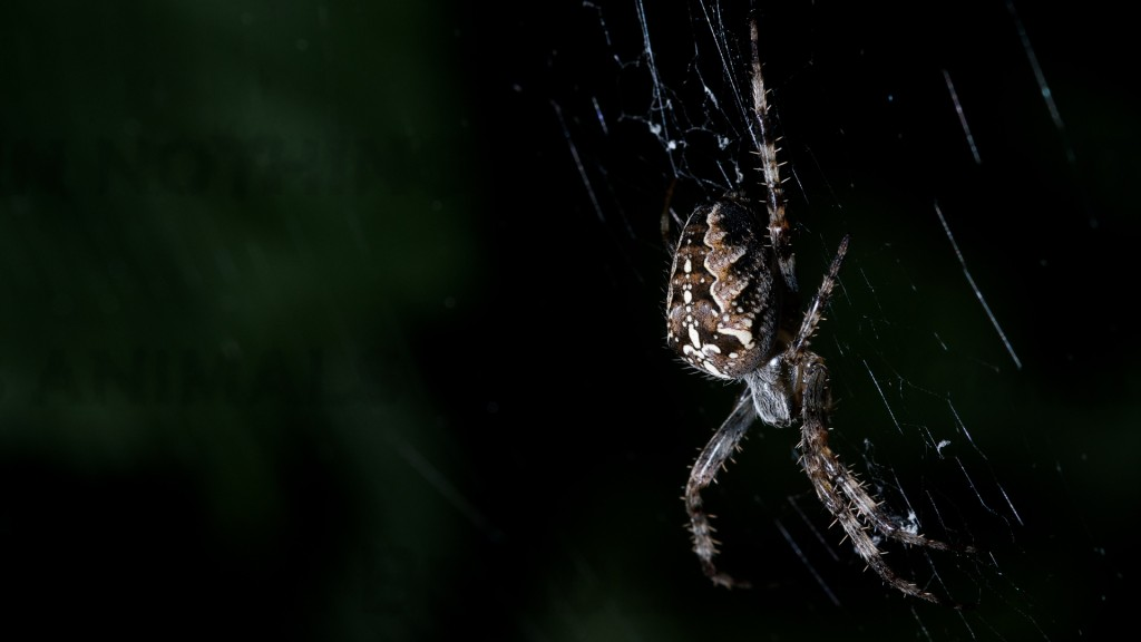 spider-wallpaper-23762-24417-hd-wallpapers