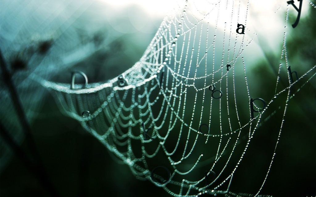 spider-web-23770-24425-hd-wallpapers