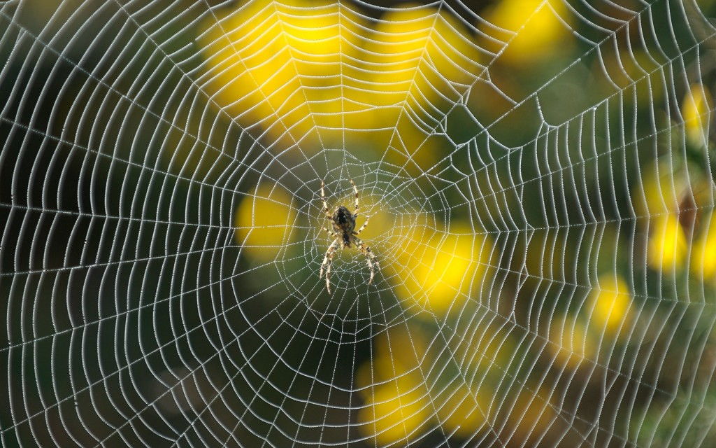 spider-web-desktop-wallpaper-49621-51297-hd-wallpapers
