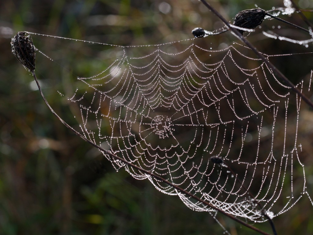 spider-web-hd-41577-42598-hd-wallpapers
