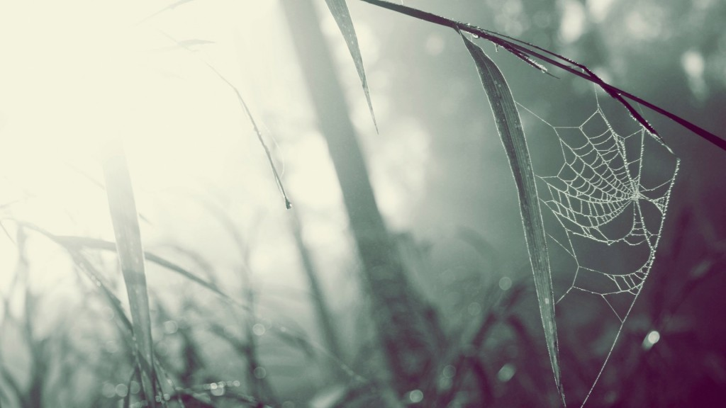spider-web-wallpaper-41574-42550-hd-wallpapers