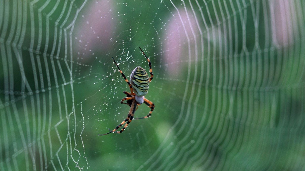 spider-web-wallpaper-49622-51298-hd-wallpapers