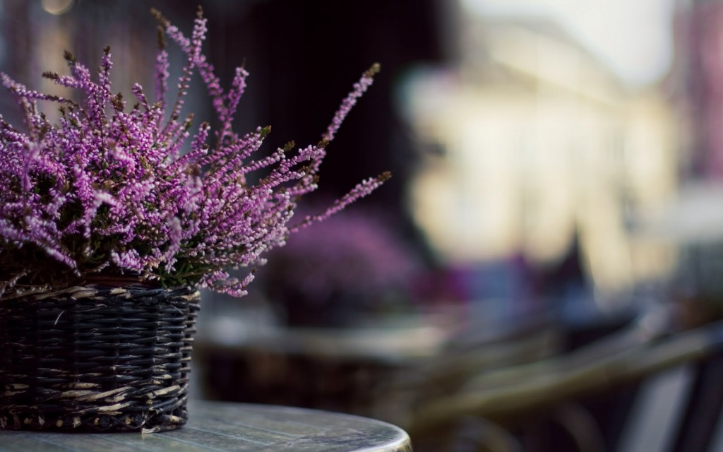 table-flowers-40130-41067-hd-wallpapers