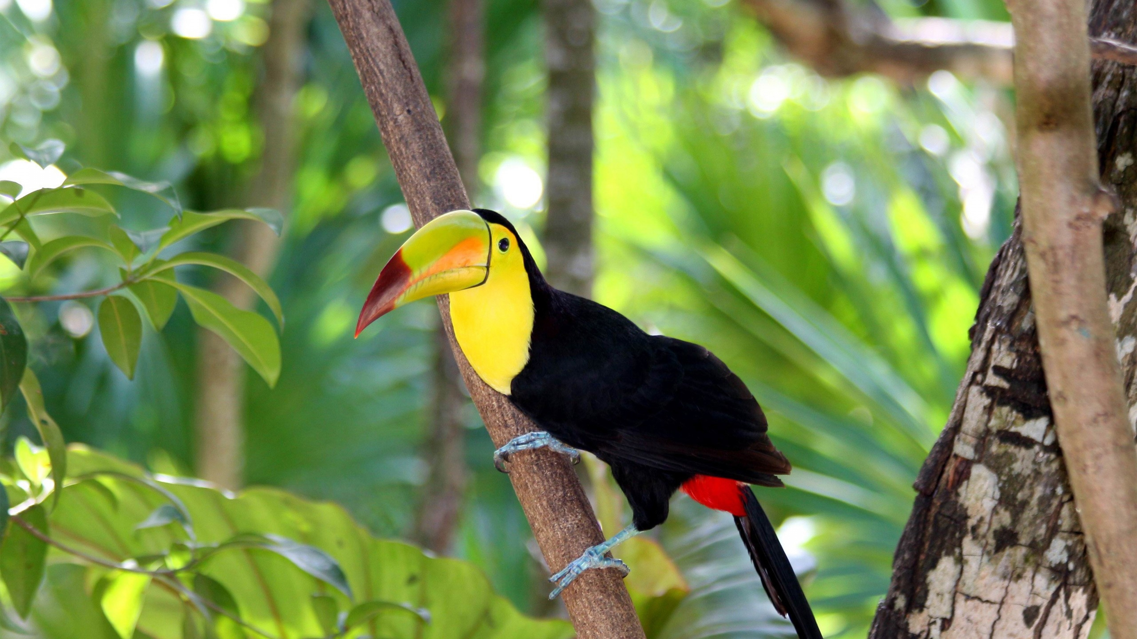 17 Hd Toucan Bird Wallpapers Hdwallsource Com HD Wallpapers Download Free Images Wallpaper [1000image.com]